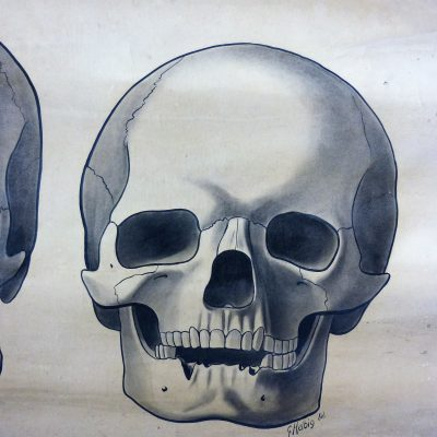 Anatomic Skull School Poster 1